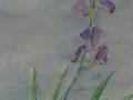 2004-Iris