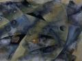 2002-Fischauge-Ausschnitt
