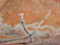 07-Birdy