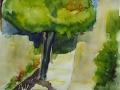 2003-Mas_de_Rey-Maulbeerbaum